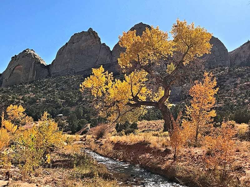 Fall colors in the southern Utah desert