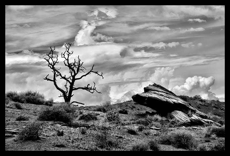Black & White photo of the desert, large boulder and dead gnarled tree